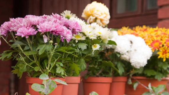Σπίτι μας για τη φροντίδα των φυτών