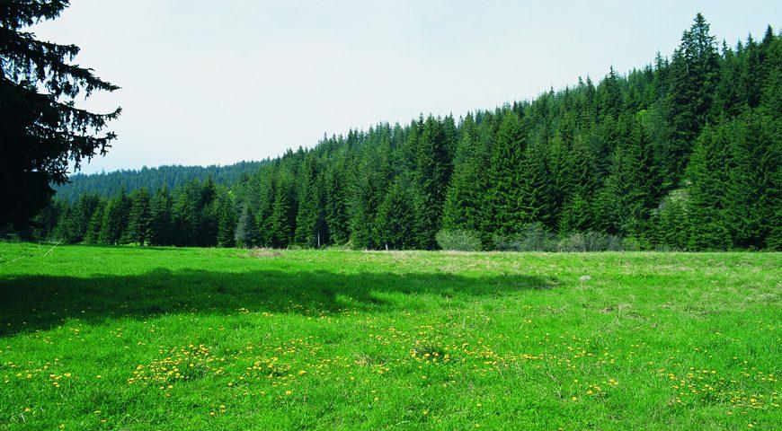 Αποτέλεσμα εικόνας για Εθνικό Πάρκο Οροσειράς Ροδόπης